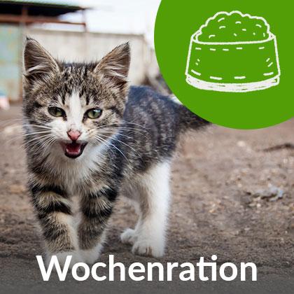 Wochenration-Kitten_