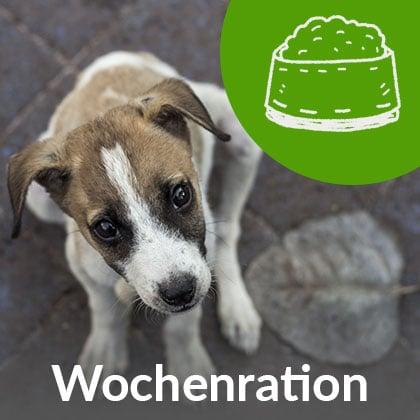 Wochenration-Welpen_