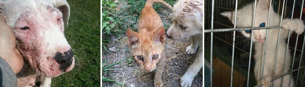 Vergessene Katzen in Not Tierschutz-Shop Futter spenden Tieren helfen