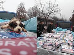 Andeo-Hundenothilfe-Tierschutz-Shop-Futter-spenden