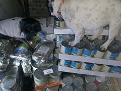 Gnadenhof-Wildtierrettung-Notkleintiere-Tierschutz-Shop-Futter-spenden