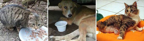 Straßentiere-in-Not Tierschutz-Shop Futter spenden Tieren helfen