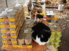 Tierheim-Marl-Tierschutz-Shop-Futter-spenden