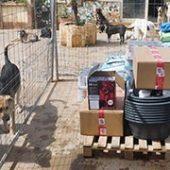 Hunde_in_Not-Sizilien_und_Hundehilfe_-Italien_3-Tierschutz-Shop-Futterspenden