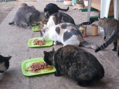 Spendenankunft_Katzenhilfe Pfotenschutz Bulgarien e.V.1