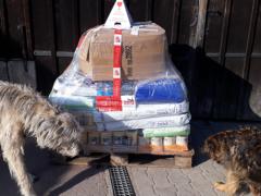 Spendenankunft Tierschutzhunde Russland e.V. 1