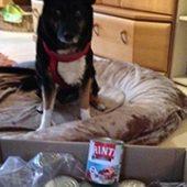berner_sennenhunde_nothilfe_1-Tierschutz-Shop-Futterspenden