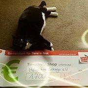 helpforstrays_3-Valentinsaktion-Tierschutz-Shop-Futterspenden