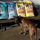 lucky_dog_hostel_1-Tierschutz-Shop-Futterspenden