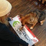 streunerhilfe_bulgarien_2-Tierschutz-Shop-Futterspenden