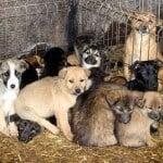 Hilfe für vergessene Waisenkinder und Fellnasen Tierschutz-Shop