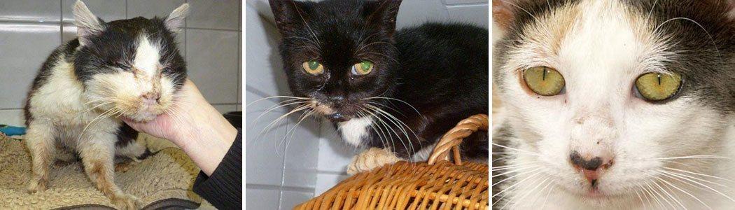 Katzenhilfe Hoyerswerda Tierschutz-Shop