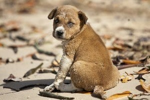 Tierschutz-Magazin-Tierschutz-im-Sommer