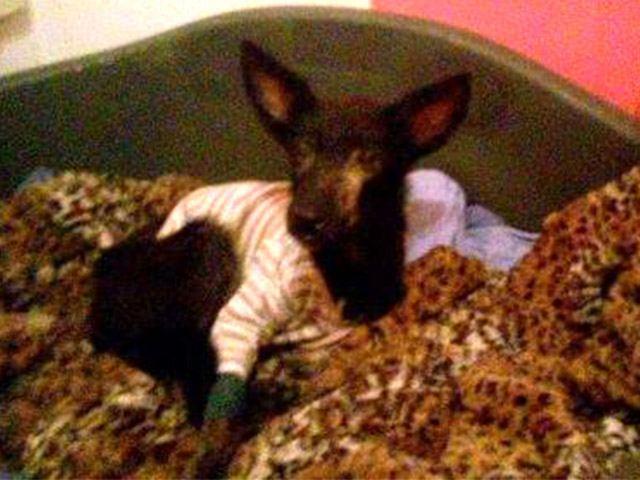 Fatima Hilfe für vergessene Waisenkinder und Fellnasen Tierschutz-Shop