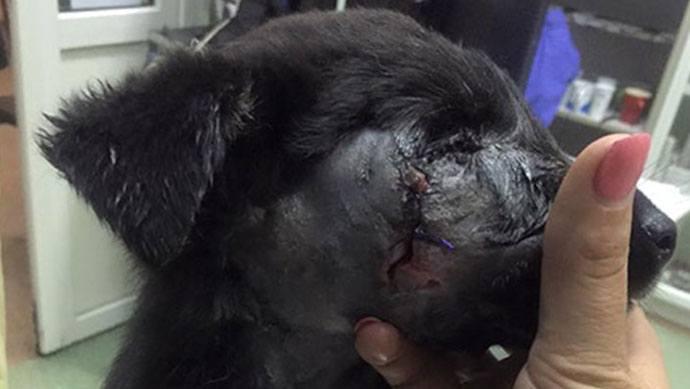 verletzte Hündin Fatima in der Tierklinik