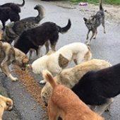 Hilfe_Vergessene_WaKi_FeNa_2-Spendentransport_Für_Rumänien-Tierschutz-Shop-Futterspenden