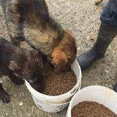 Hilfe_Vergessene_WaKi_FeNa_4-Spendentransport_Für_Rumänien-Tierschutz-Shop-Futterspenden