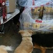 Pfotenhilfe_Oropos_1-Tierschutz-Shop-Futterspenden