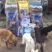 Save_A_Dog_Germany_1-Tierschutz-Shop-Futterspenden