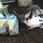Second_Life_4_Dogs_1-Tierschutz-Shop-Futterspenden