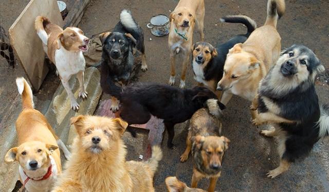 Stolzi-&-seine-Freunde Die-Schlucht-der-freien-Hunde Tierschutz-Shop