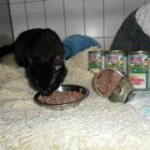 tierheim_feucht_1-Tierschutz-Shop-Futterspenden