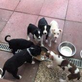 tierheim_moers_1-Tierschutz-Shop-Futterspenden