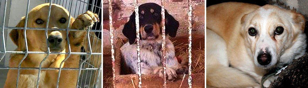 Pfotenhilfe mit Herz Tierschutz-Shop Futter spenden