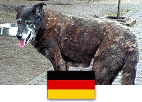 Tierschutz Polen