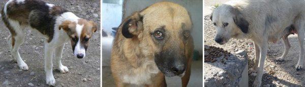 Animal-soul-savior Tierschutz-Shop Futter spenden