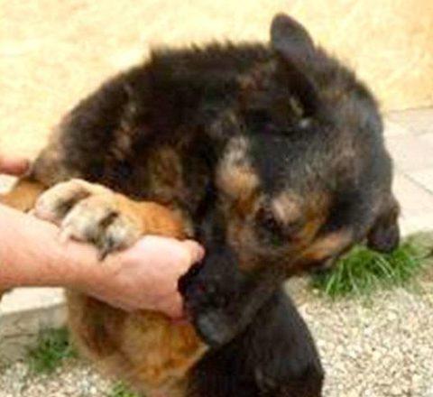 Stimmen für die Namenlosen Tierschutz-Shop