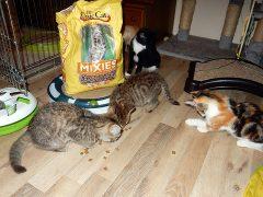 Kitten in Not