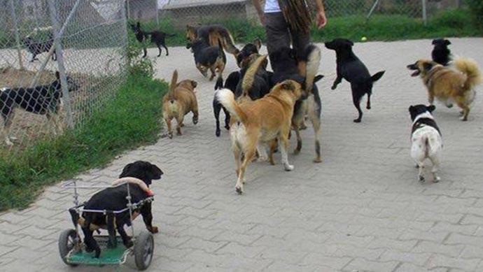 Tierschutz-Shop zahlt Perelka e.V. seine Geld-Prämie und fördert damit den Tierschutz in Polen.