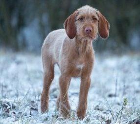 Tierschutz-Magazin Tierschutz im Winter