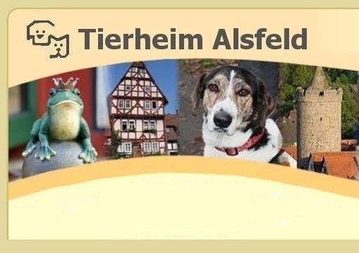 Banner-Tierheim-1-1.jpg