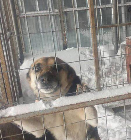 Fellnasen e.V. Tierschutz-Shop Futter spenden