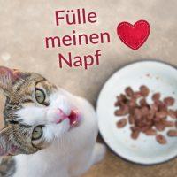 Fülle meinen Napf Tierheimprodukt Katzen