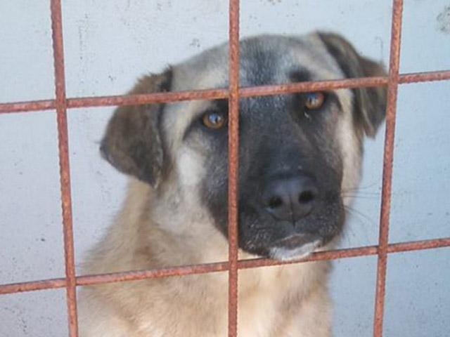 Pro Animals Deutschland Tierschutz-Shop Futter spenden