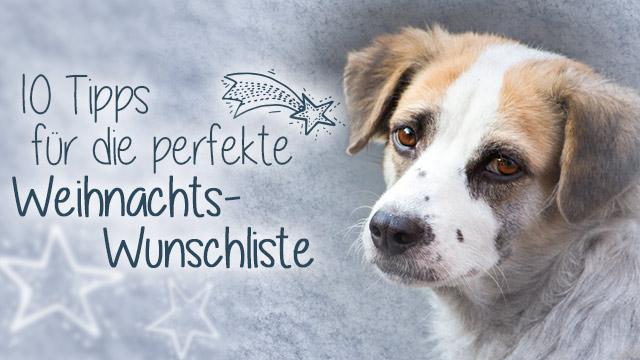 Futterspenden zu Weihnachten Tierschutz-Shop Tipps für Wunschliste