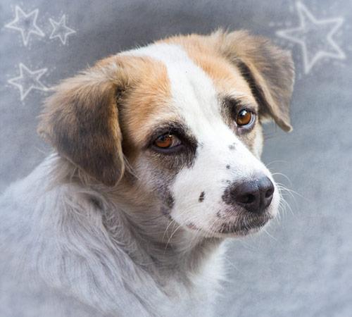 Futterspenden zu Weihnachten Tierschutz-Shop Facebook-Paket