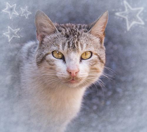 Futterspenden zu Weihnachten Tierschutz-Shop Homepage-Paket