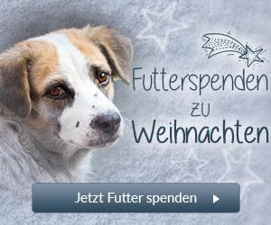 Futterspenden zu Weihnachten Tierschutz-Shop