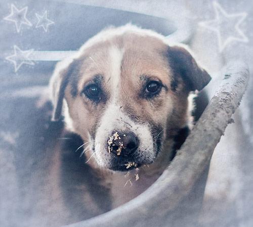Futterspenden zu Weihnachten Tierschutz-Shop Kommunikations-Paket