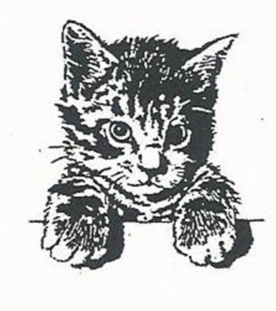 Katzenschutzverein.-1-1.jpg
