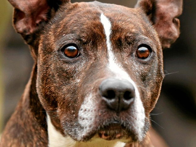 Listenhunde-Nothilfe e.V.