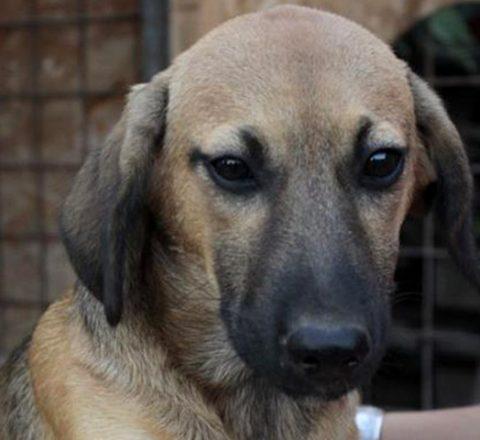 TSV Notpfote Animal Rescue Tierschutz-Shop