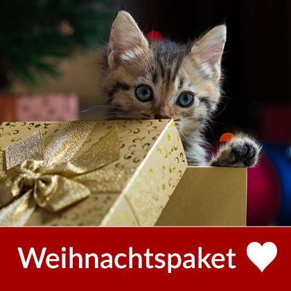 Weihnachtspaket für Katzen: gesundes Trocken- u...