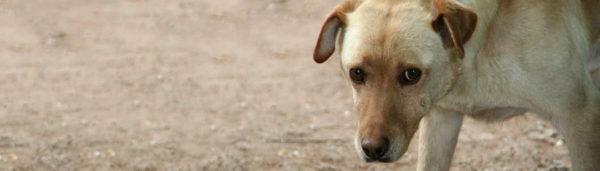 Tierschutz-Shop Futter-Spendenplattform Pfotenhilfe Ungarn