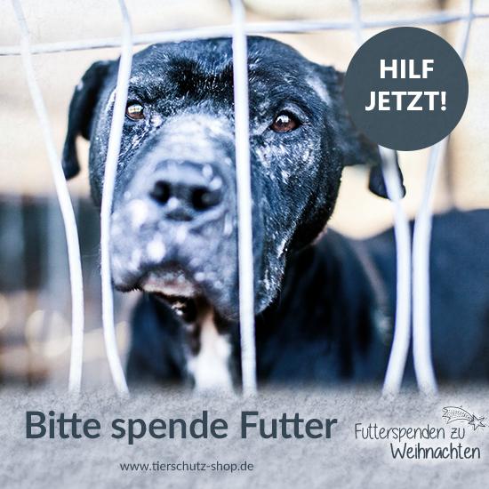 Futterspenden zu Weihnachten Tierschutz-Shop Facebook Post
