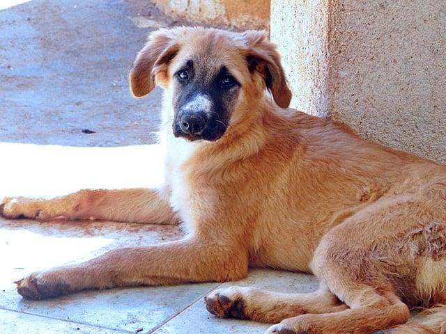 Hundehilfe Italien Tierschutz-Shop Futter spenden